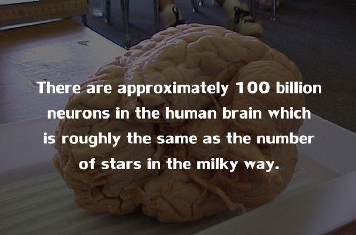20 điều đáng kinh ngạc về cơ thể con người