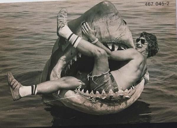 Con cá mập này cũng không đến nỗi hung tợn như trong phim Hàm cá mập nhỉ?