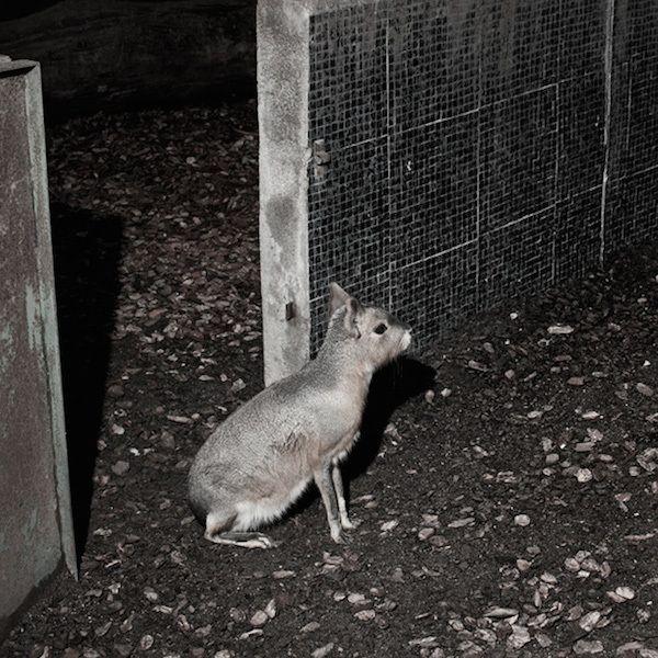 Ngoài cái lạnh, các con vật đáng thương phải trải qua một khoảng thời gian buồn tẻ
