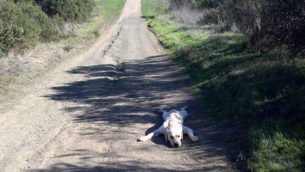 Nằm dài giữa đường, đã đến lúc phải nghỉ ngơi