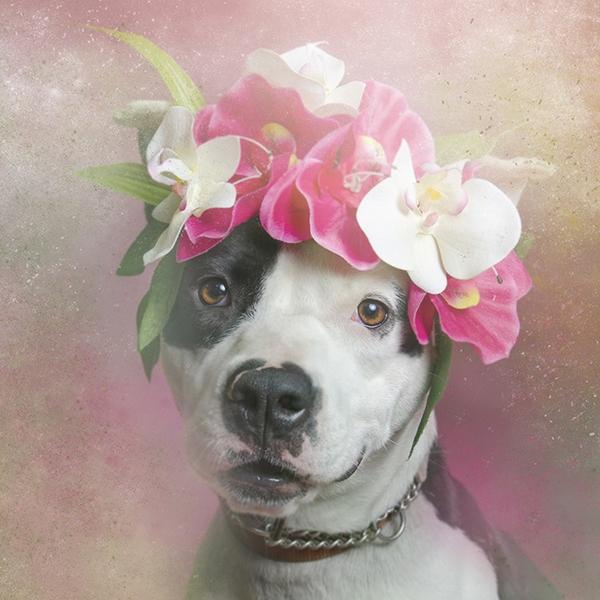 Khác lạ hình ảnh những chú chó pitbull theo phong cách...Lana Del Rey