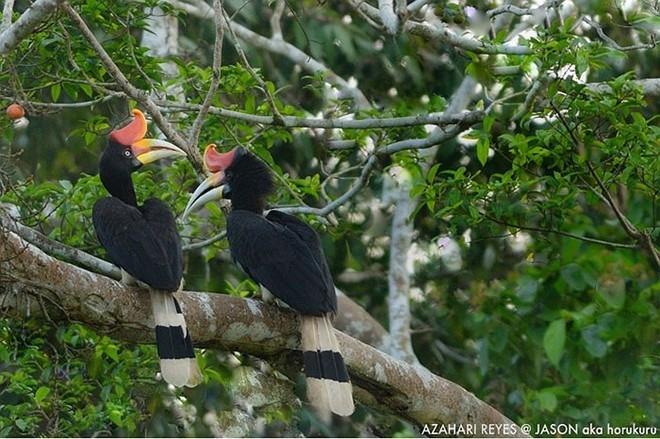 Bí ẩn ít biết về loài chim đẹp như trong huyền thoại