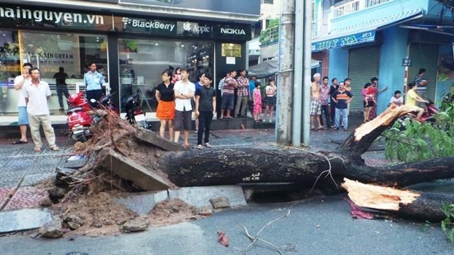 Những cái chết bất thình lình trên đường phố