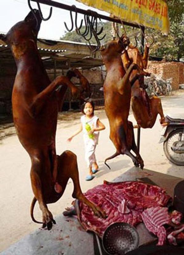 Thịt chó được bày bán ở nhiều nơi