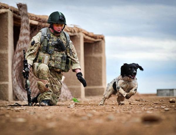 Chú chó Theo và hạ sĩ Tasker