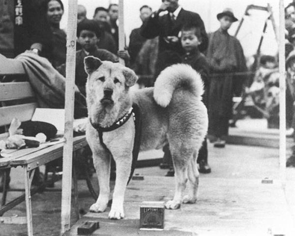 Chú chó Hachiko đứng đợi chủ nhân ở ga tàu trong suốt nhiều năm trời