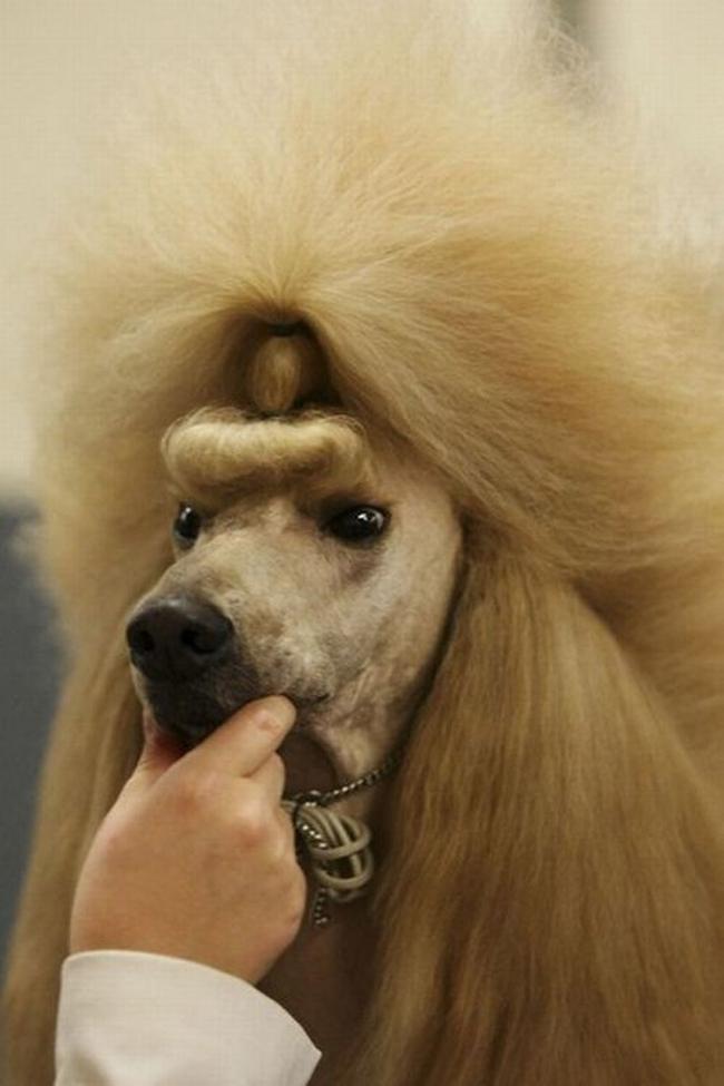 Đây có phải là tóc đuôi gà không nhỉ?