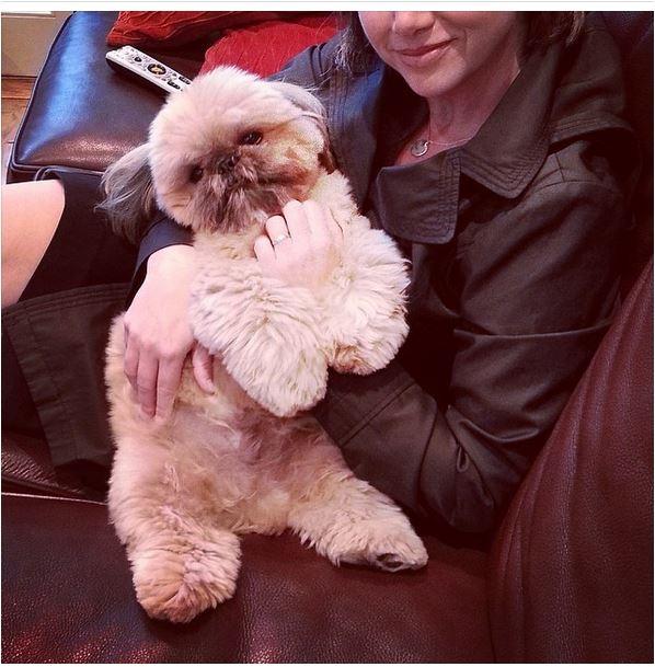 """Ngắm chú chó """"đáng yêu nhất thế giới"""" thu hút trăm nghìn lượt theo dõi"""