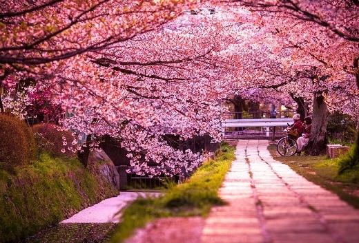 Những điểm ngắm hoa anh đào nổi tiếng xứ Phù Tang