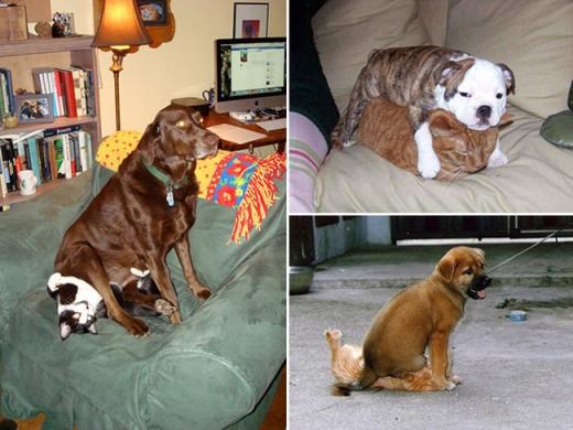 Sở thích có phần hơi quái đản của các bé chó cưng nhỉ.