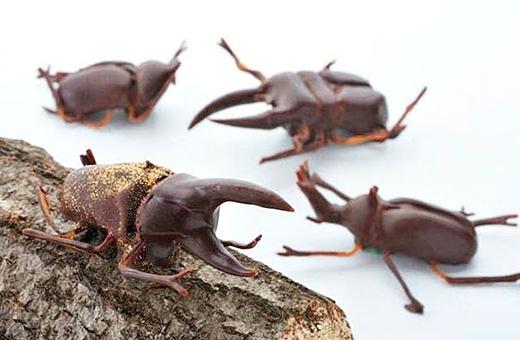 Những con bọ hung cánh cứng phiên bản chocolate thế này trông đáng yêu hơn nhỉ