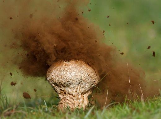 Tròn mắt với hình ảnh những loài nấm kỳ quái