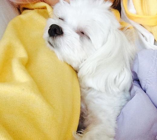 Min khoe hình chú cún cưng đang nằm ngủ ngon lành trên vai của cô