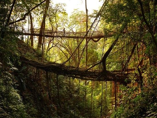Nếu đến Meghalaya hãy nhớ ghé thăm những cây cầu rễ cây như thế này nhé!