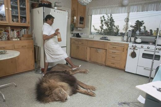 Người giúp việc bước qua chú sư tử để tránh làm nó thức giấc.