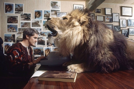 Ông Noel Marshal cố gắng tập trung làm việc trong tiếng gầm gừ của Neil trên bàn.