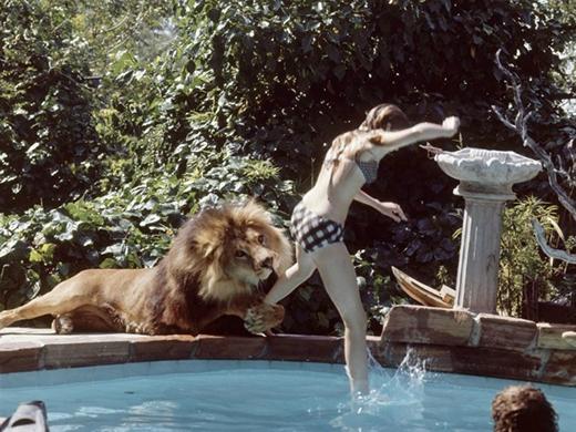 Melanie Griffith phải nhảy vào hồ bơi khi Neil bất ngờ quặp lấy chân mình. Bức ảnh cho thấy dù có thân thiết với động vật cỡ nào thì chúng ta cũng không thể hoàn toàn nắm bắt tâm lý, hành động của động vật hoang dã.