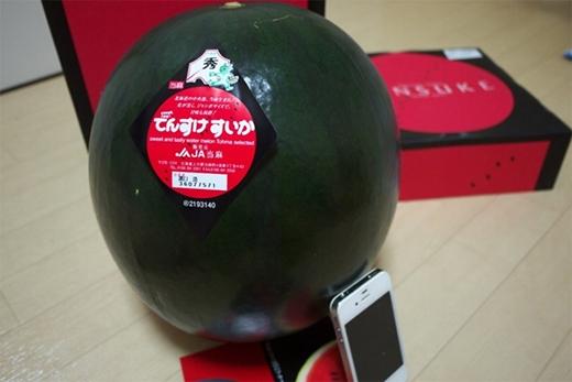 Mỗi năm, đảo Hokkaido, Nhật Bản chỉ có thể thu hoạch được 65 quả dưa hấu Densuke. Chính vì vây, người ta đã đưa tên của loại quả này vào danh sách những thực phẩm cực hiếm cũng như có mức giá đắt đỏ bậc nhất trên thế giới. Muốn thử mùi vị của Densuke, bạn phải chi ít nhất 6.000 USD.