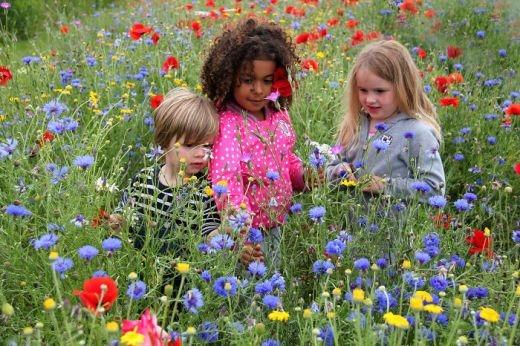 Ai nói trẻ em thì không thích hoa?