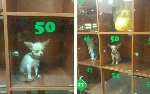 Chú chó khó chịu vì bị bỏ lại trong tủ giữ đồ ở siêu thị
