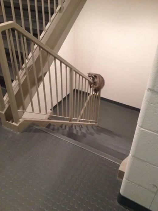Khi động vật cũng muốn chơi cầu tuột
