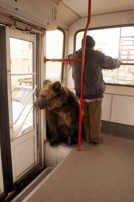 Dẫn gấu đi chơi