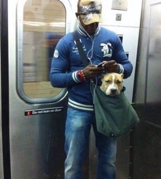 Chú chó có vẻ không được vui lắm