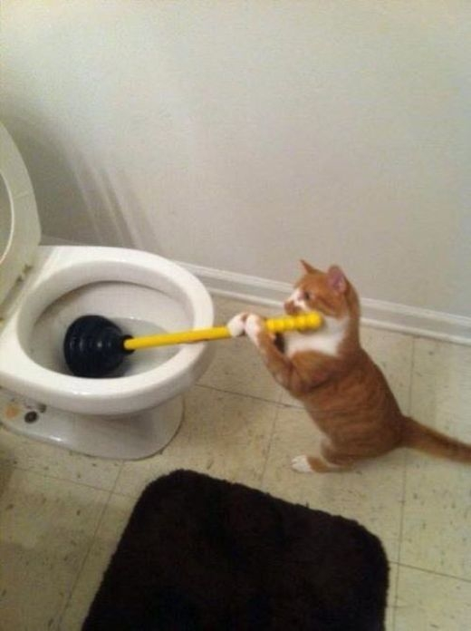 Nhà này chẳng ai chịu làm việc, cứ phải để chú mèo ra tay!