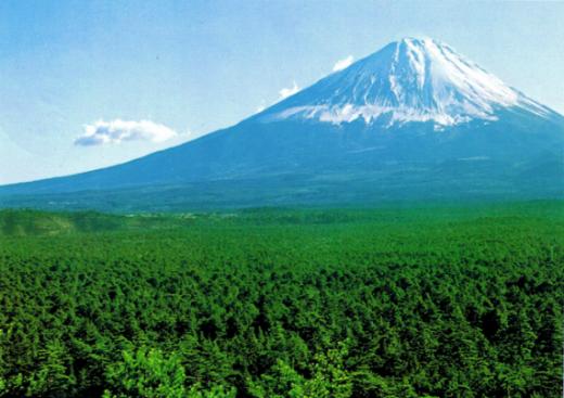 Khu rừng rộng 35 km vuông này hoàn toàn tách biệt với thế giới bên ngoài với những lớp cây rừng dày đặt, thiên nhiên hoang dã và màn sương mờ ảo.
