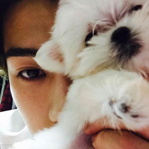 Nối gót Tao, Sehun cũng khoe thú cưng đáng yêu của mình. Anh không ngần ngại ôm thú cưng đưa lên mặt khiến fan không khỏi thích thú và có chút ghen tị.