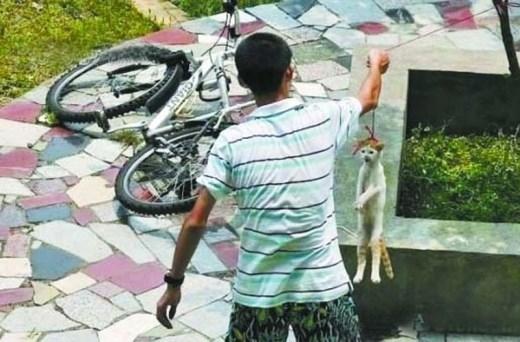 Các chuyên gia cũng cho rằng, những người lấy việc đày đọa động vật làm trò vui cần đi khám chuyên khoa tâm thần.