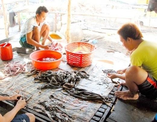 Có trên dưới 10 hộ dân chuyên làm nghề này gần 10 năm nay, mỗi ngày cung cấp cho thị trường miền Tây hàng chục kg khô rắn các loại. Khô rắn ở đây nức tiếng khắp nhiều tỉnh thành đồng bằng sông Cửu Long.