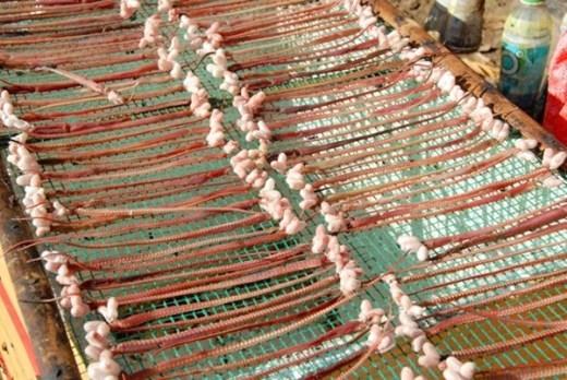 Còn bím rắn đực được phơi khô, bán giá từ 500 -700 đồng/cái, tùy theo lớn nhỏ, chủ yếu dùng để ngâm rượu.