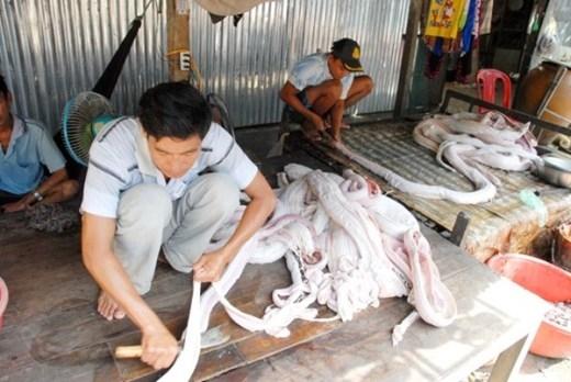 Ngoài sản xuất khô rắn, nơi đây còn sản xuất khô trăn. Thông thường cứ 5 kg thịt trăn cho ra 1kg khô.
