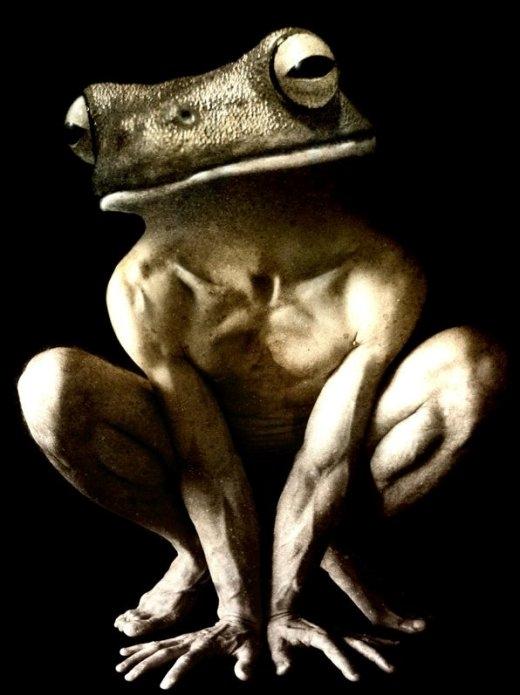Bạn có thấy sợ người ếch này?