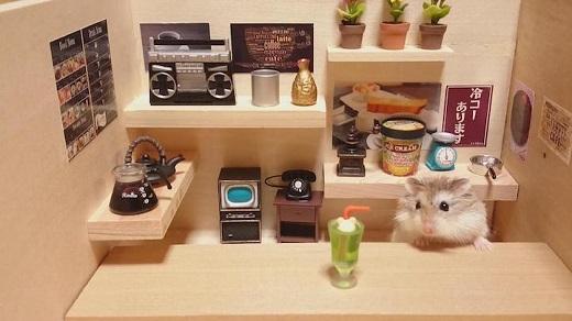 Sato sưu tập được rất nhiều vật dụng tí hon cho các em hamster của mình