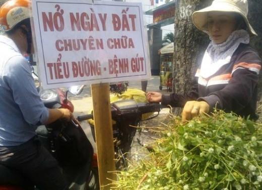 Cây hoa nở ngày đất, một loại thảo được đang bán khắp thành phố vì những lời đồn trị bách bệnh.