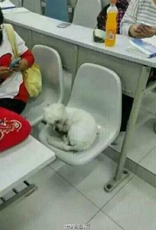 Thi thoảng cũng cuộn tròn ngủ trong lớp