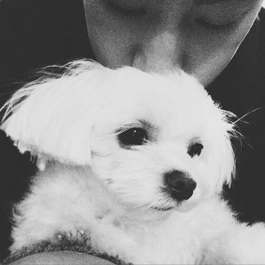 Mark (GOT7) đã gửi 'nụ hôn ngọt ngào' dành cho chú cún cực đáng yêu và viết trên trang cá nhân: 'Bobo'.