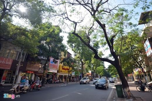 Chỉ những cây nghiêng, sâu bệnh, mục ruỗng mới bị thay thế. Cụ thể từ ngày 28/11 đến 25/12 tại phố Kim Mã, (đoạn từ ngã tư Daewoo đến ngã ba Kim Mã - Sơn Tây - Nguyễn Thái Học), 56 cây xanh ở đây, đa phần sẽ bị chặt hạ.