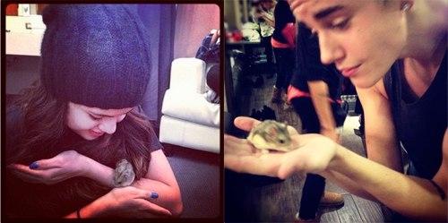 Chú chuột hamster được Justin cho fan