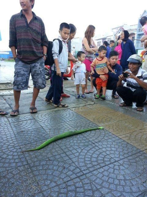 Ngày 4/12, người dân phát hiện và đập chết con rắn lục đuôi đỏ ở gần cầu Thuận Phước. Ảnh: Người dân cung cấp.