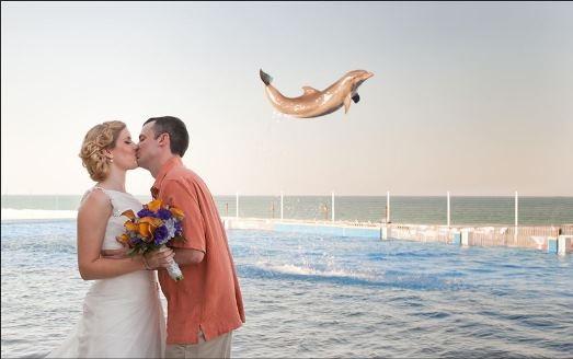 Một cặp vợ chồng đã kết hôn ở Florida hồi đầu năm nay khi đang trao nhau nụ hôn để chụp bức ảnh cưới, thì bỗng một con cá heo nhảy lên hưởng ứng tại công viên Marineland Dolphin. Không bỏ lỡ cơ hội, nhiếp ảnh gia đã bắt ngay được khoảnh khắc này. Và đây cũng là bức ảnh là cặp vợ chồng thích nhất.
