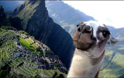 Junichi Masuda, 34 tuổi, đến từ New York trong một lần đến thăm thành phố cổ Machu Picchu, trong lúc đang đứng trên khu đồi cao để chụp lại những bức ảnh lưu niệm thì một vị khách không mời mà đến xuất hiện. Đã thế 'anh ấy' lại còn 'rất tỉnh đẹp trai'...