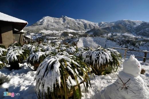 Lớp tuyết phủ xuống bề mặt thị trấn Sa Pa có nơi dày đến 20cm.