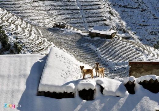 Ruộng bậc thang, kỳ quan nhân tạo của Sa Pa lần đầu tiên trong hơn 50 năm qua trở thành những bậc thang băng tuyết.