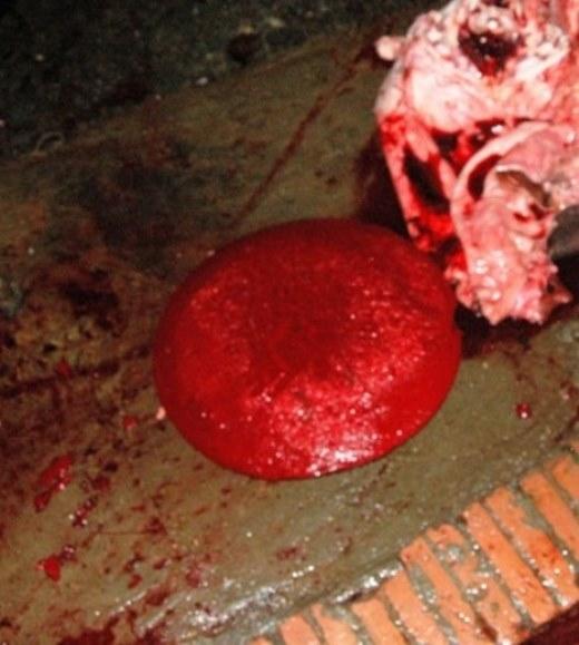 """Giữa tháng 11/2014, PV Vietnamnet đã thâm nhập đường dây buôn thịt lợn ốm chết ở Mỹ Hào, Hưng Yên, chứng kiến những thủ thuật biến thịt lợn sề ốm chết thành thịt bò y như thật. Theo người tên Lãng, chủ một lò mổ ở đây, thì lợn chết hay sống cũng làm giả bò được, tuy nhiên lợn sề chết phải dùng kỹ sảo phức tạp hơn. Lợn sề sau khi mổ phanh được lóc thành mảng giao cho từng người tỉ mẩn kháy từng thớ thịt một. Các chủ lò mổ dùng huyết bò tưới lên thịt lợn sề để giả màu, và sử dụng nước mỡ bò rán thoa một lượt quanh thịt lợn để tạo mùi, nhằm qua mắt người dùng. Mỗi con lợn sề nặng chừng 2 tạ có thể chế được tới 70-80 kg """"thịt bò"""". Ảnh: Vietnamnet."""