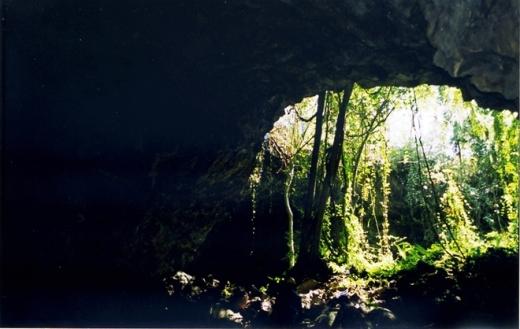 Một số cửa hang nhìn từ phía trong ra ngoài, với khung cảnh thiên nhiên núi rừng hùng vĩ.