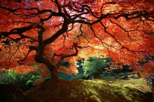 Vườn Nhật Bản ở Ba Lan