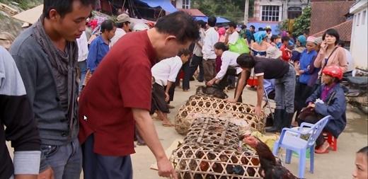 . Chợ gia súc - gia cầm phong phú ở Lào Cai.